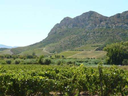 Korsika Küstenregion Weinberge Berge