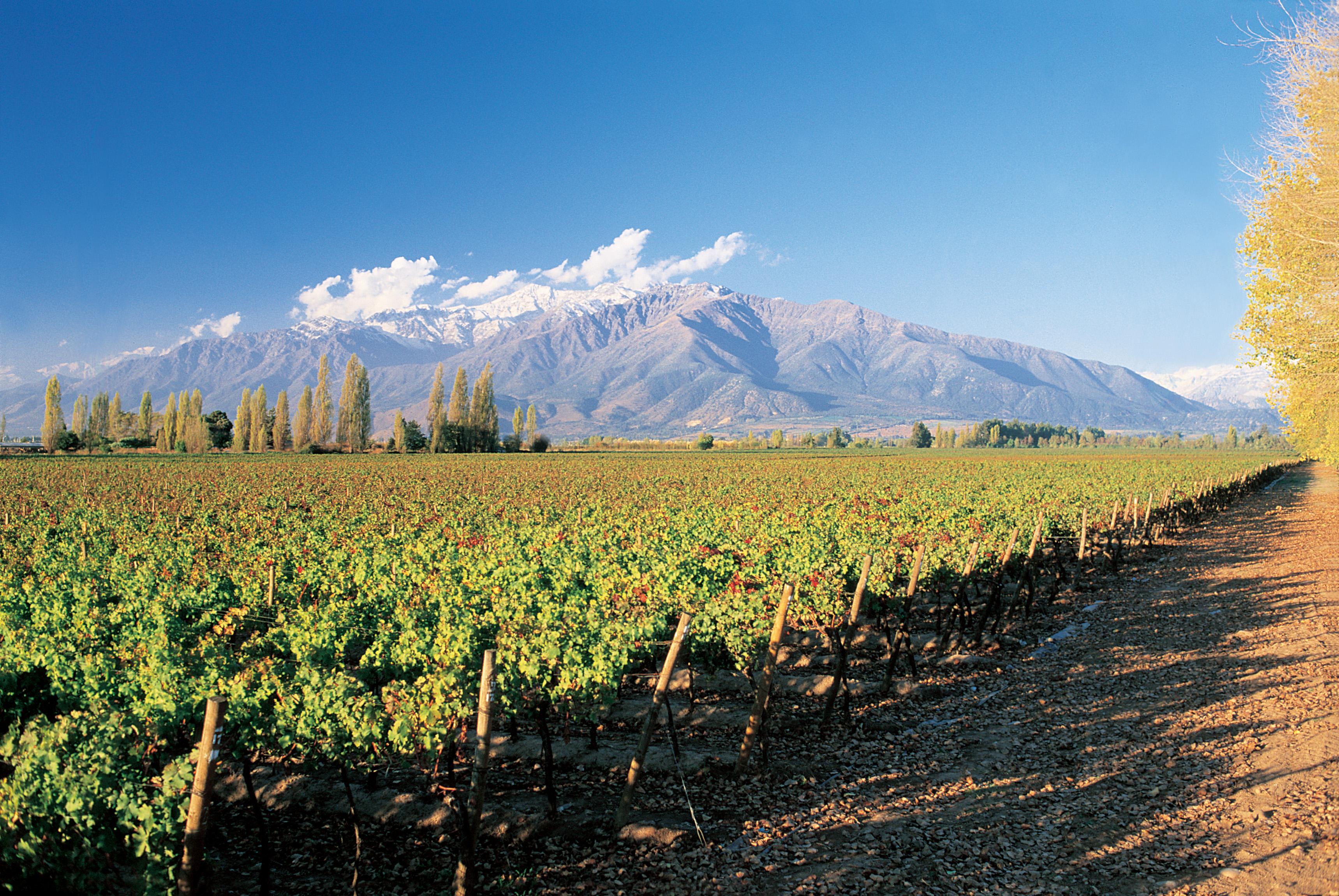 Weingut Montes Weine